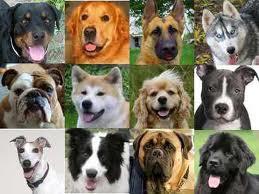 dog brees pics
